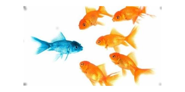 Atelier collaboratif : la manipulation dans la relation client